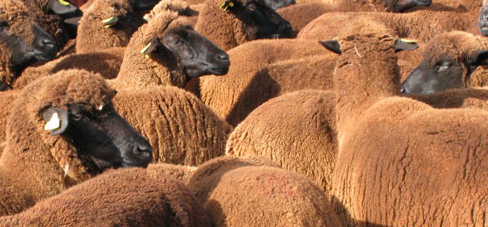 Ropa hecha con lana de origen nacional
